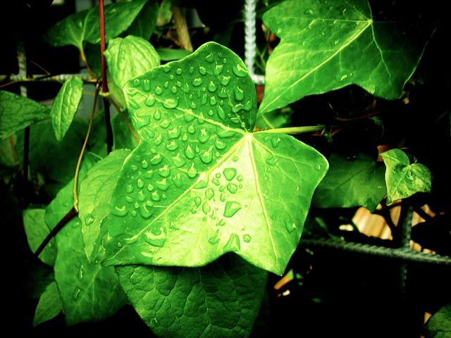 foliage-384681_640